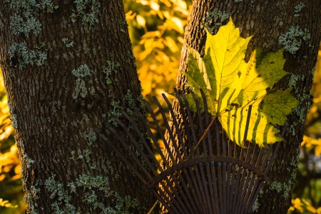 Autumn leaf on a rake, warm evening light on background photo