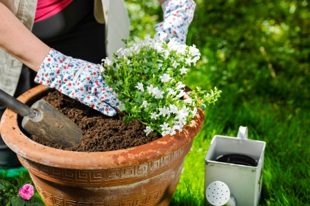 plant pot: A mature woman planting flowers, sunny day