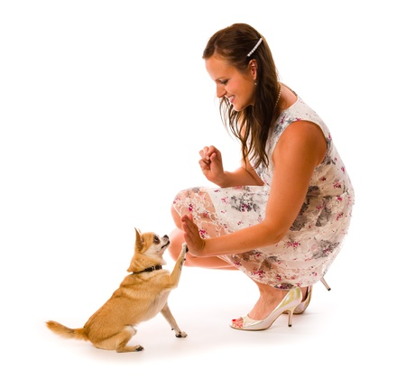 Attractive beautiful woman training her dog, white background photo