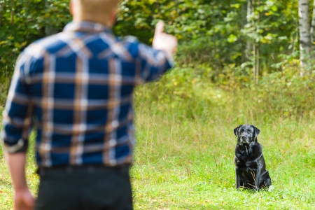 Dog owner trains his labrador retriever, dog sits on background, horizon format
