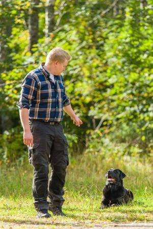 dutiful: Dog owner trains his labrador retriever, dog lie down on background, vertical format