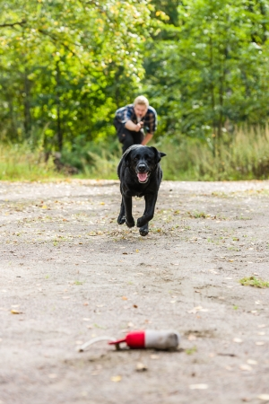 Dog owner trains his labrador retriever on outdoor, vertical format photo