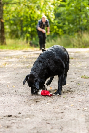 Dog owner trains his labrador retriever on outdoor, vertical format Stock Photo - 22442455