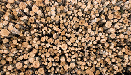 Pile of cut firewood, different sizes of birch logs. photo