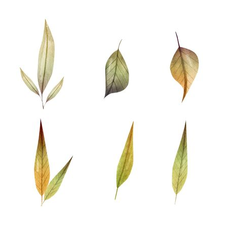 Set autumn botanic elements - branches. illustration isolated on white background