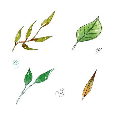 Set autumn botanic elements - branches. illustration isolated on white background