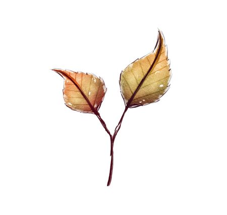 Branch of colored beautiful autumn leaves. Isolated on white background.