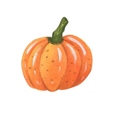 Watercolor fresh orange pumpkin. illustration halloween.Hand Drawn watercolor illustration.Isolated on a white background.