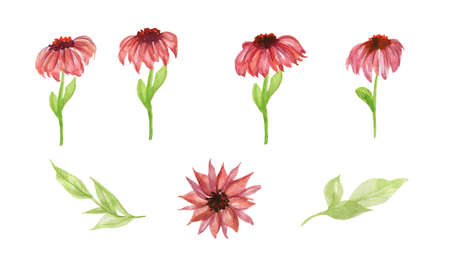 Set of Gerbera daisy: orange, red, yellow flowers and green leaves on white background, digital draw, botanical. Hand Drawn watercolor illustration.Isolated on a white background.