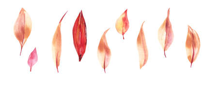 Watercolor autumn leaf set. Hand Drawn watercolor illustration.Isolated on a white background.