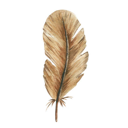 Watercolor feather.Hand Drawn watercolor illustration.