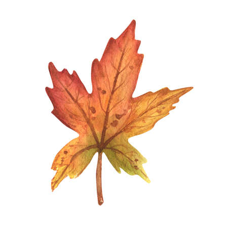 Watercolor colorful autumn leaf isolated on white background. Hand Drawn watercolor illustration.