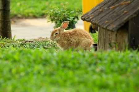 Baby brown rabbit in grass photo
