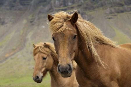 Horse Фото со стока