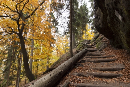 road autumnal: Autumn in forest - Czech Republic Stock Photo
