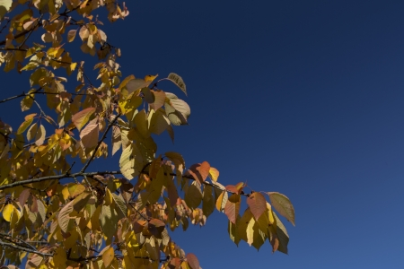 Beautiful leafs in autumn with blue sky photo