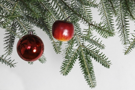 christmas decoration - red apple on green branch photo