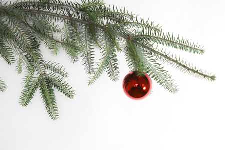 christmas decoration - red ball on green branch photo
