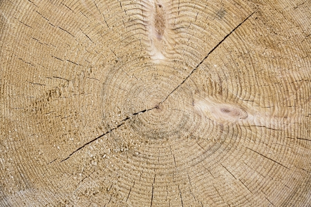Beautiful wooden texture from the tree photo