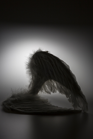 angels wings on white background with glow - looks like a fallen angel  photo