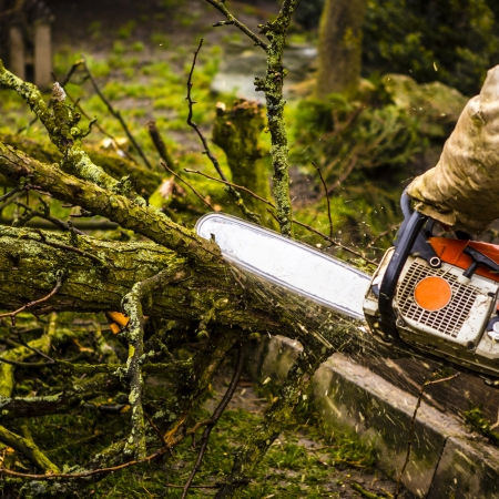 Man sawing a log in his back yard with orange saw Stock Photo