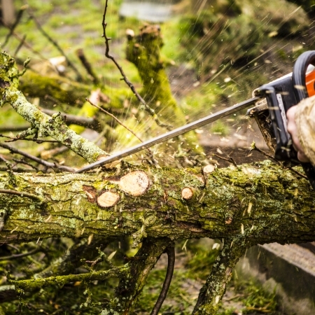 sawing: Man sawing a log in his back yard with orange saw Stock Photo