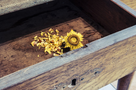 beautiful old sunflower on old wooden background photo