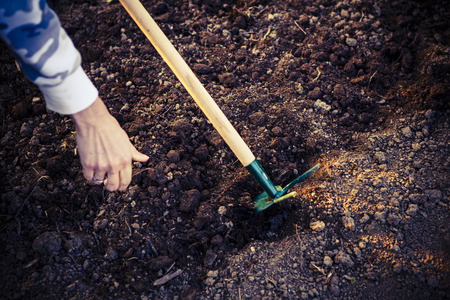 gardening, green hoe and woman hand in the garden photo