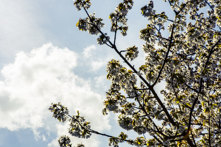 flowers apricot flowers tree spring background nature - blue haven photo