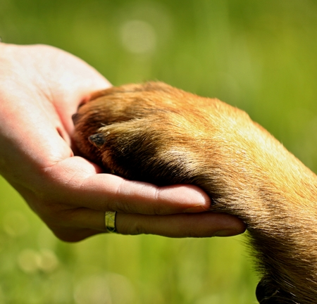 Dogs paw and mans hand best friends