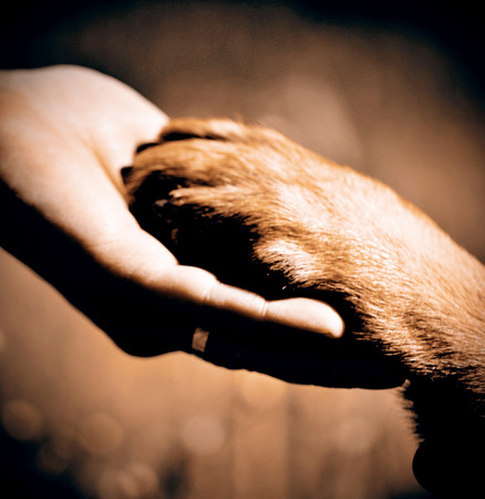 animal hand: Dog´s paw and man´s hand best friends