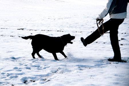 perro furioso: Agresivo retriever negro en la nieve Foto de archivo