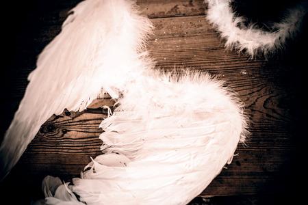 animal angelic: angel wings on the wooden floor - retro