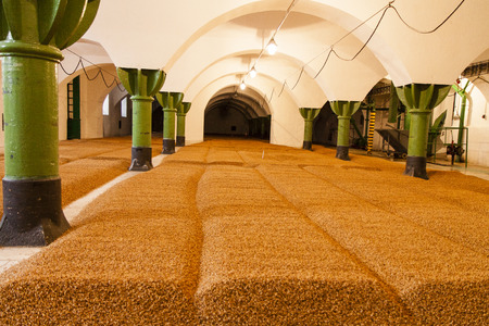 barley in old brewery in czech republic - ready for great beer