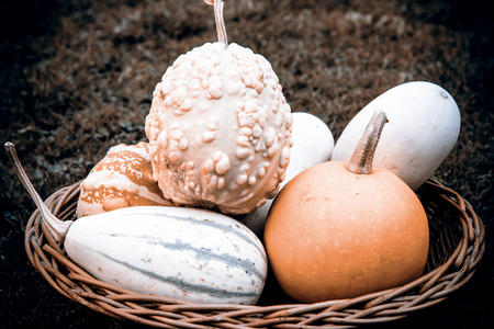 beautiful pumpkins in the basket on the grass photo
