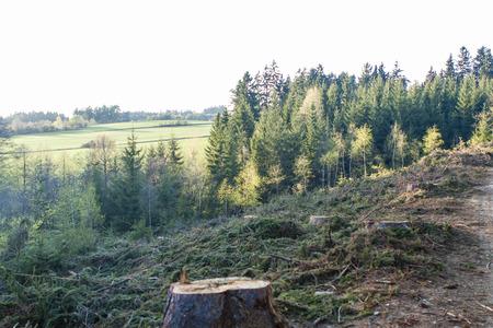 deforestation: deforestation - stump and the rest of forest