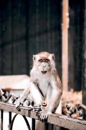 monkies: Monkey - Kuala Lumpur, Malaysia