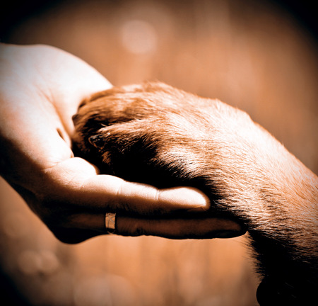 in hand: Dog´s paw and man´s hand best friends
