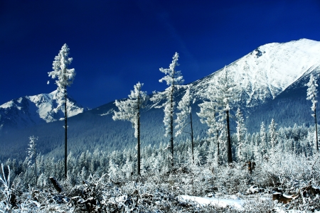 Winter trees  Winter forest in Tatranska Lomnica - High Tatras mountains, Slovakia