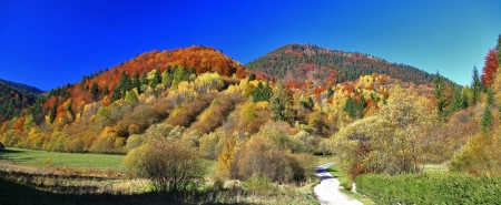 Autumn forest, region Liptov, Slovakia Stock Photo - 17624646