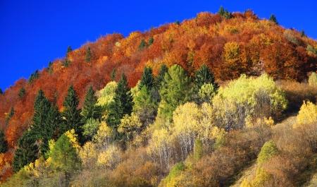 Autumn forest, region Liptov, Slovakia Stock Photo - 17624648