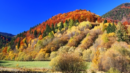 Autumn forest, region Liptov, Slovakia Stock Photo - 17624655