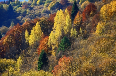 Autumn forest, region Liptov, Slovakia photo