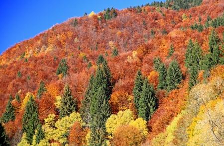Autumn forest, region Liptov, Slovakia