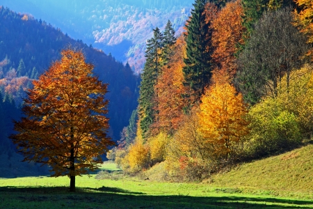 Autumn forest, region Liptov, Slovakia Stock Photo - 17624651