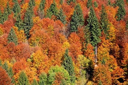 Autumn forest, region Liptov, Slovakia photo