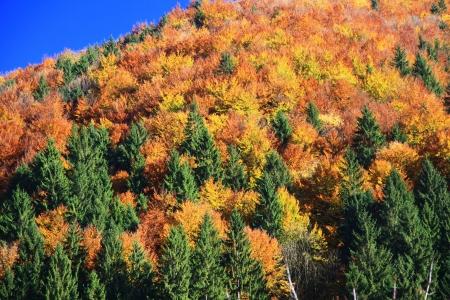 Autumn forest, region Liptov, Slovakia Stock Photo - 17624647