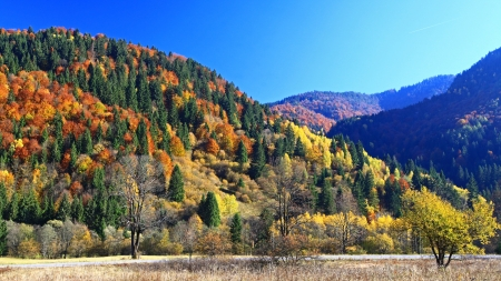 Autumn forest, region Liptov, Slovakia Stock Photo - 17624650