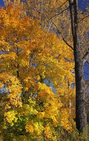 Autumn trees in region Liptov, Slovakia Stock Photo - 17624692