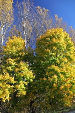 Autumn trees in region Liptov, Slovakia Stock Photo - 17624698